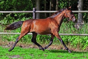Yearling Sale – In Extremis