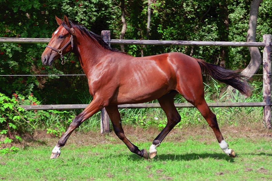 Yearling Sale – Impereur